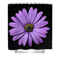Purple African Daisy Shower Curtain