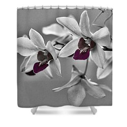 Purple And Pale Green Orchids - Black And White Shower Curtain