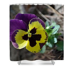 Shower Curtain featuring the photograph Purple And Yellow Pansy by Tara Potts