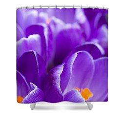 Purple Shower Curtain by Anne Gilbert