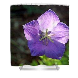 Purple Balloon Flower In Bloom Shower Curtain by Kenny Glotfelty