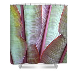 Shower Curtain featuring the photograph Purple Banana by Evelyn Tambour