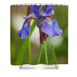 Purple Bearded Iris Oil Shower Curtain