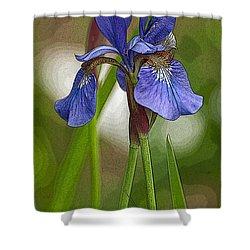 Purple Bearded Iris Watercolor With Pen Shower Curtain by Brenda Jacobs