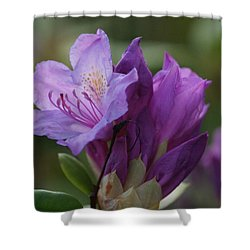 Purple Bloom Shower Curtain