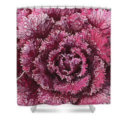 Purple Cabbage On A Frosty Morning Mill Shower Curtain by Stuart Westmorland