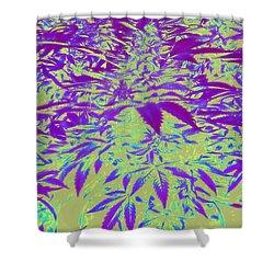 Purple Canna Shine Shower Curtain