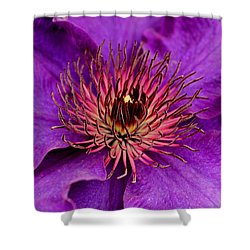Shower Curtain featuring the photograph Purple Clematis by Suzanne Stout