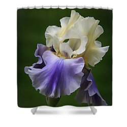 Shower Curtain featuring the photograph Purple Cream Bearded Iris by Patti Deters