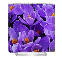 Purple Crocus Shower Curtain by Elena Elisseeva