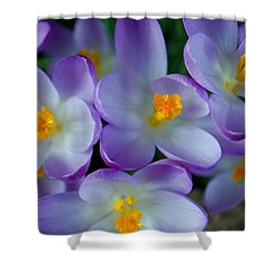 Purple Crocus Gems Shower Curtain