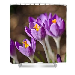 Purple Crocus Shower Curtain
