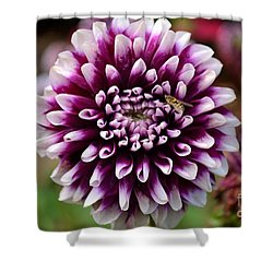 Purple Dahlia White Tips Shower Curtain