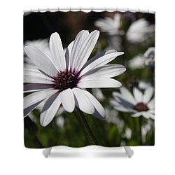 Purple Daisies 2 Shower Curtain