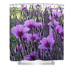Shower Curtain featuring the photograph Purple Field by Jasna Gopic