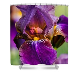 Purple Flag Shower Curtain