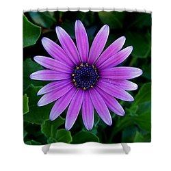 Purple Flower Shower Curtain by Pamela Walton
