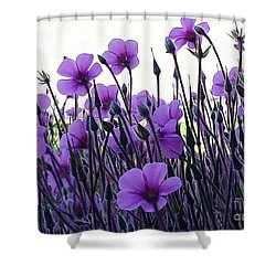 Shower Curtain featuring the photograph Purple Flowers Dance by Jasna Gopic