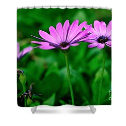 Shower Curtain featuring the photograph Purple Flowers by Joe  Ng