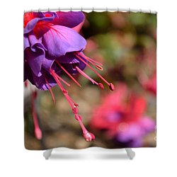 Purple Fuchsia Shower Curtain