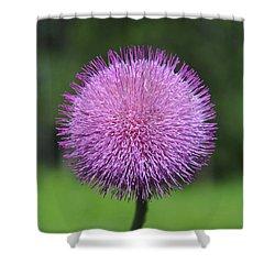 Purple Fuzz Shower Curtain by Richard Gehlbach