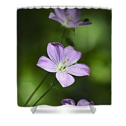 Purple Geranium Flowers Shower Curtain by Christina Rollo