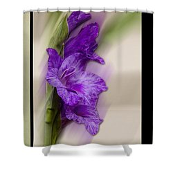 Purple Gladiolus Shower Curtain
