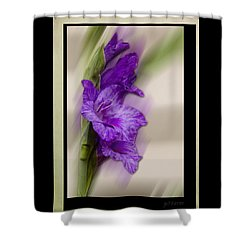 Purple Gladiolus Bloom Shower Curtain
