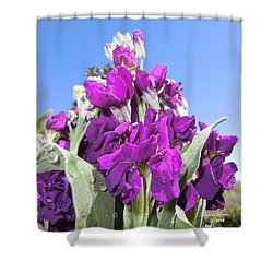 Purple Glow 2 Shower Curtain