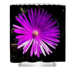 Purple Glow Shower Curtain by Pamela Walton