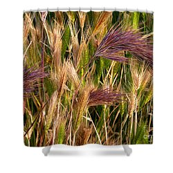 Shower Curtain featuring the photograph Purple Grasses by Meghan at FireBonnet Art