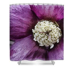 Shower Curtain featuring the photograph Purple Hellebore by Jaki Miller