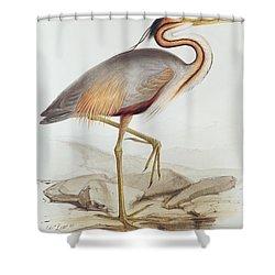 Purple Heron Shower Curtain by Edward Lear
