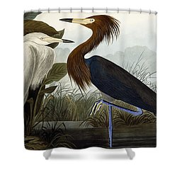 Purple Heron Shower Curtain by John James Audubon