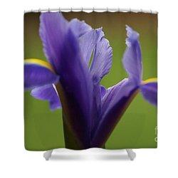 Purple Iris 7 Shower Curtain by Carol Lynch