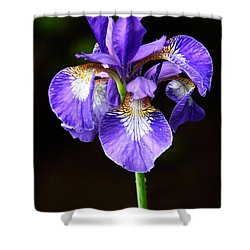 Purple Iris Shower Curtain by Adam Romanowicz