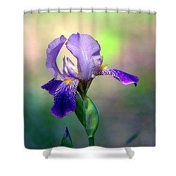 Purple Iris Shower Curtain by Deena Stoddard