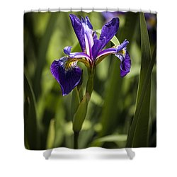 Purple Iris Shower Curtain by Penny Lisowski