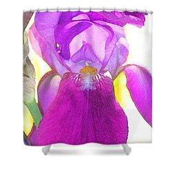 Purple Iris Watercolor Shower Curtain