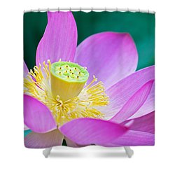 Purple Lotus Blossom Shower Curtain by Michael Porchik