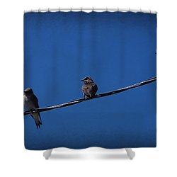 Purple Martin Trio Shower Curtain