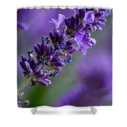 Purple Nature - Lavender Lavandula Shower Curtain