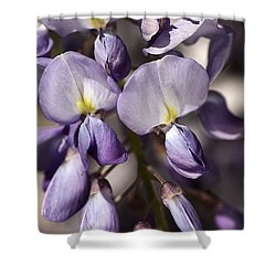 Shower Curtain featuring the photograph Purple Of Wisteria by Joy Watson