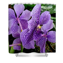 Purple Orchids Shower Curtain by Carey Chen