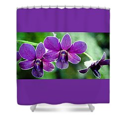 Purple Orchids Shower Curtain