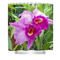 Purple Cattleya Orchids Shower Curtain by Ellen Henneke