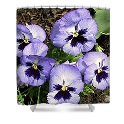 Purple Pansies Shower Curtain by Brian Chase