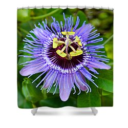 Purple Passion Flower Shower Curtain by Venetia Featherstone-Witty