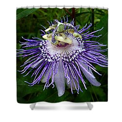 Purple Passionflower Shower Curtain