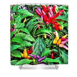 Purple Peppers Shower Curtain by Lanita Williams
